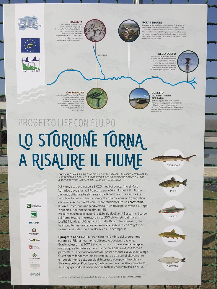 03_Diga-Isola-Serafini-bacheca-specie-pesci